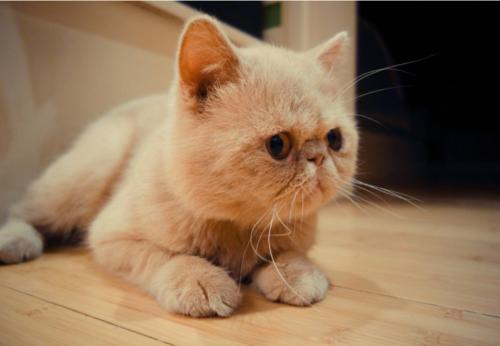 加菲猫被失主偷回,拾得人告上法院咋回事儿?